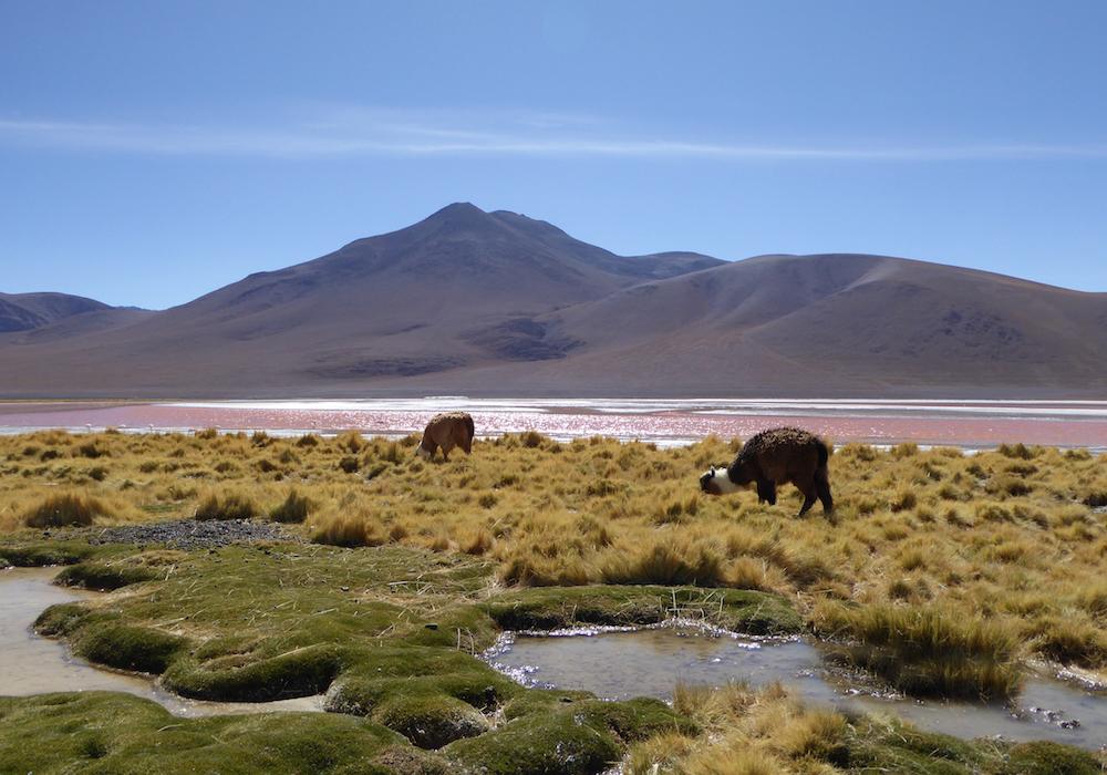 Beste Reisezeit Bolivien